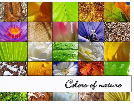 """colors of nature"" - unser CEWE FOTOBUCH des Monats November"