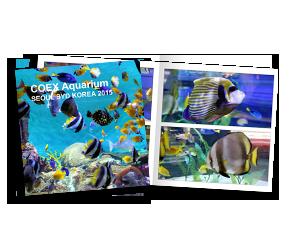 COEX Aquarium Soul Syd Korea 2015