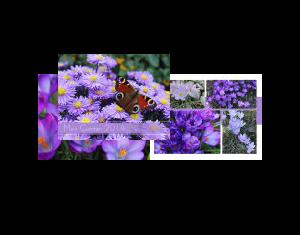 Mein Garten 2014