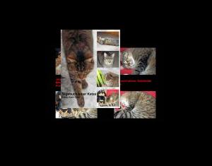 Tagebuch einer Katze