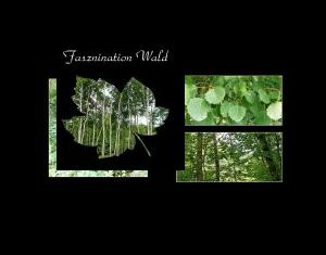 Faszination Wald