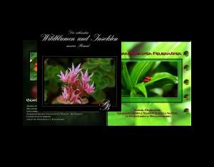 Wildblumen und Insekten