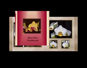 Meine kleine Orchideenwelt