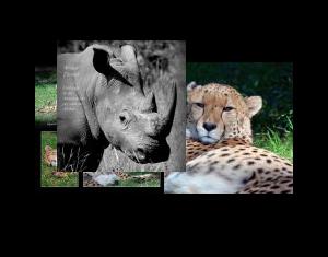 Afrikas Tierwelt