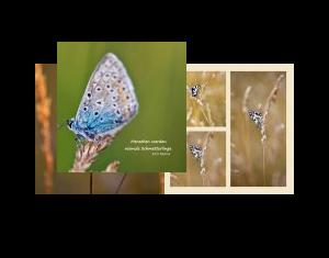 Menschen werden niemals Schmetterlinge