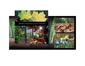 Herbstimpressionen Ammerland