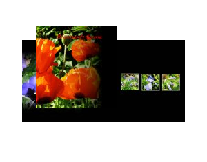 Blumenträume
