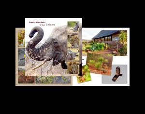 Stäger´s Afrika-Safari